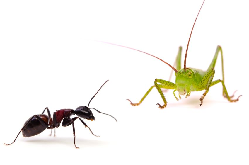 LDI Students: Choosing the Wisdom of an Ant Over the Folly of the Grasshopper