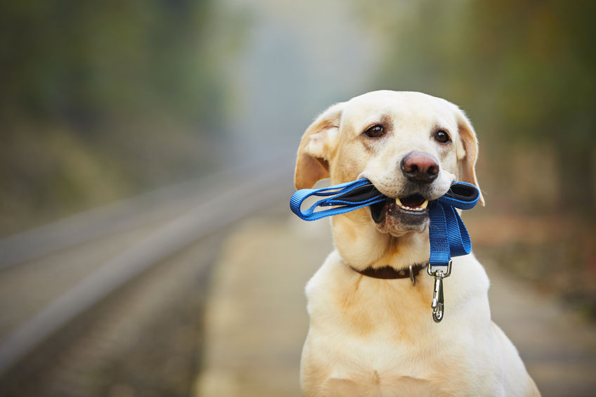 Speaker Series in Review: How Well Trained Dogs Can Change the Lives of Kids and Teens!